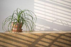 Remedios naturales para matar mosquitos en la Casa de las plantas