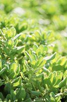 Fácil explicación del proceso de fotosíntesis