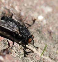 ¿Cómo deshacerse de moscas alrededor de un montón de compost