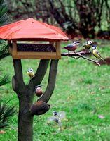 Tipos de alimentadores del pájaro