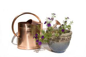 El agua del grifo vs. Agua destilada para plantas
