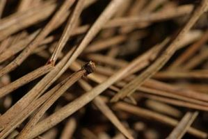 ¿Debo poner plástico abajo debajo agujas de pino para mantener crecimiento de malas hierbas?