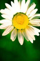 Las mejores flores de corte de Tejas