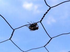 Remedio casero de la mosca Repelente