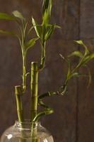 Bajo mantenimiento y rápido crecimiento de plantas altas