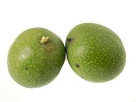 ¿Cómo hacer crecer árboles de nuez dura de los frutos secos