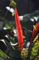 Las plantas que viven sobre los árboles o el aire