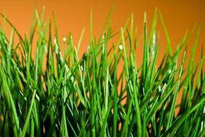 Es musgo de turba una buena enmienda del suelo para césped?