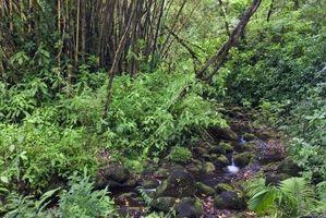 Selva Tropical Árboles y Plantas