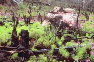 Formas de detener un incendio forestal sin agua