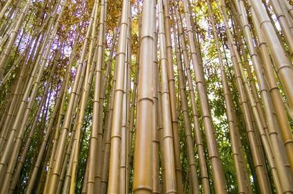Pisos de bambú y termitas