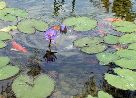 Bricolaje exterior del estanque de peces