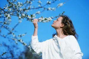 Hongo en ciruelo floreciente de la corteza de árbol