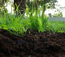 Tipos de mantillo para un jardín de verduras
