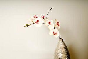 Cómo cultivar orquídeas como Casa de las plantas