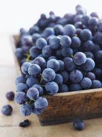 Las temperaturas que matan a las vides de uva Concord