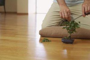 Ficus Bonsai o la figura del árbol de información