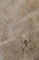 Cómo identificar las arañas de Vermont