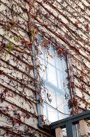 Cómo eliminar el moho Negro en Windows
