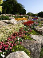 Top Ten de rápido crecimiento las plantas de jardín