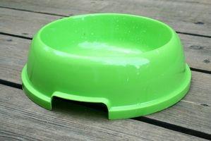 Cuenco de agua para deshacerse de las pulgas