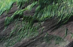 Qué es el suelo las algas?