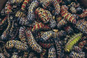 ¿Cómo deshacerse de los gusanos del saco de árboles