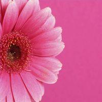 Diferentes tipos de teñido Flores