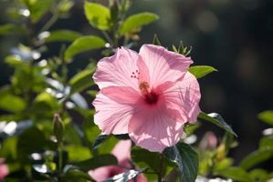 ¿Qué tipos de flores se pueden emparejar con Calas?