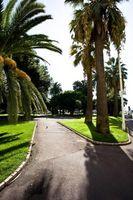 Cómo inyectar las palmeras con el fertilizante en Florida