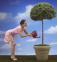 ¿Cómo hacer crecer y dar forma a un Pom Pom Árbol