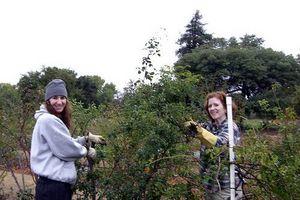 Cómo podar los árboles que llora Mulberry