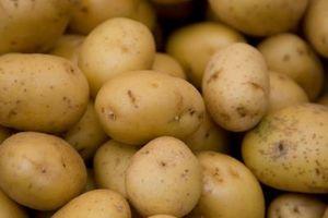 Cuándo plantar patatas en Wisconsin