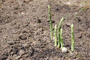 Cómo cultivar vegetales perennes