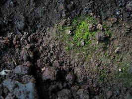 El efecto de decaimiento de la vida vegetal en suelo