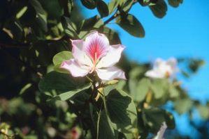 Las plantas nativas en Georgia