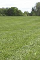 Lo que hace Hongo en la hierba parece?