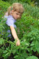 Paso a paso las instrucciones a la plantación para niños