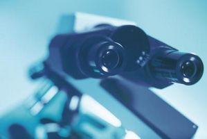 Cómo utilizar un compuesto microscopio ligero correctamente