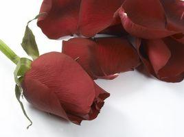 Cómo decorar con Negro, blanco y rojo de las rosas