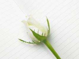Las plantas con flores blancas y espinas