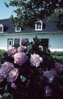 Flores en Minnesota que viven durante cerca de 50 años