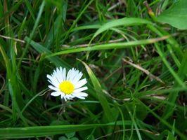 Guia De Campo De Pequenas Flores Silvestres Blancas Digfineart Com