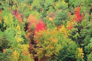 Los árboles de otoño de colores