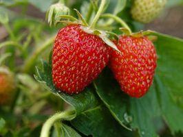 Cómo hacer tu propio Strawberry Pot