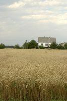 Tipos de fertilizantes agrícolas