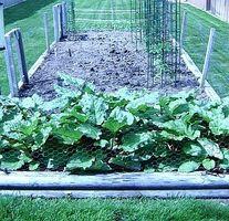 Cómo hacer de errores y el gusano de repelentes naturales para sus plantas de tomate