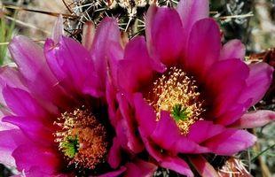 Las ideas de Arizona Paisaje del desierto