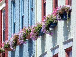 Las mejores flores para una ventana