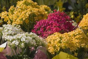 Cómo seleccionar luces de crecimiento para plantas de flores